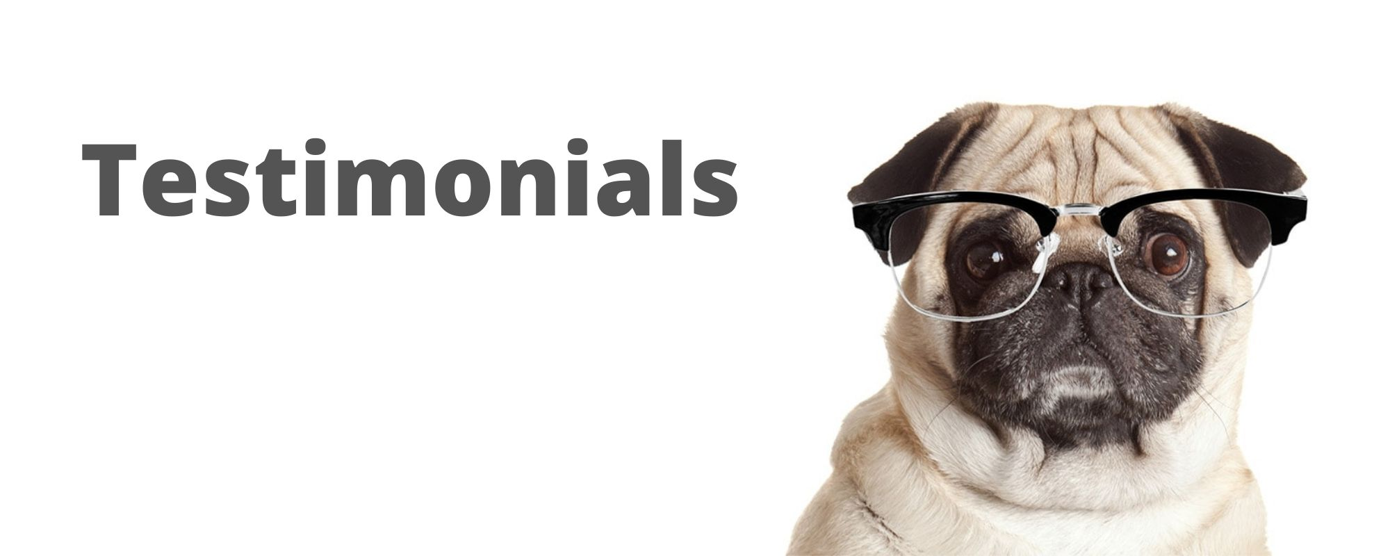 testimonial pug